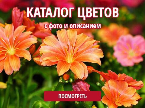 Каталог цветов с фото