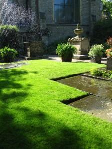 низкорослые растения для газона