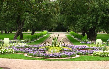 низкие растения для газонов