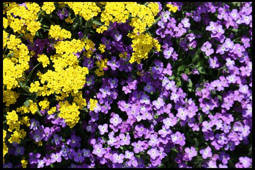 красивые цветы для сада