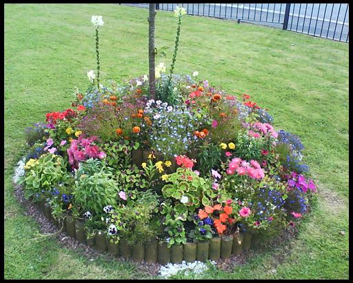 Цветов в клумбу из каких цветов