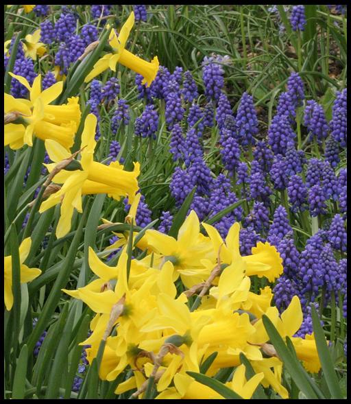 красивое сочетание цветов