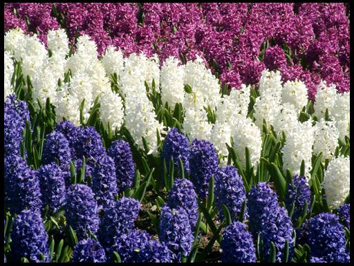 цветы посадить