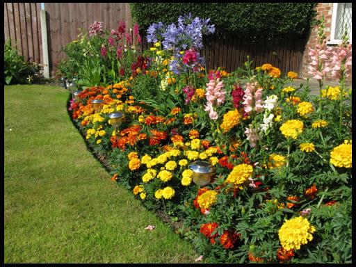 Цветы на дачном участке советы по