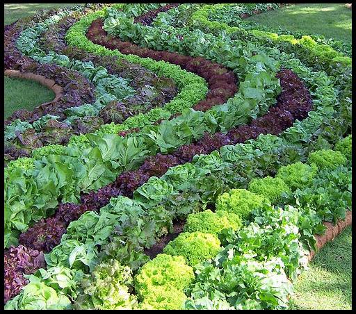 клумба из трав и овощей