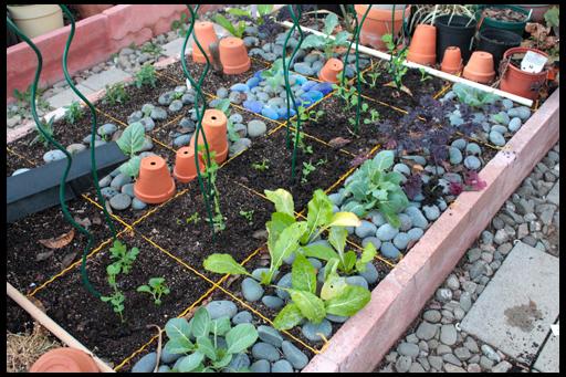 посадка овощной клумбы