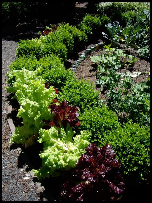 клумба из овощей