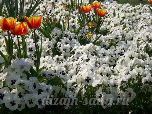 сочетание тюльпанов