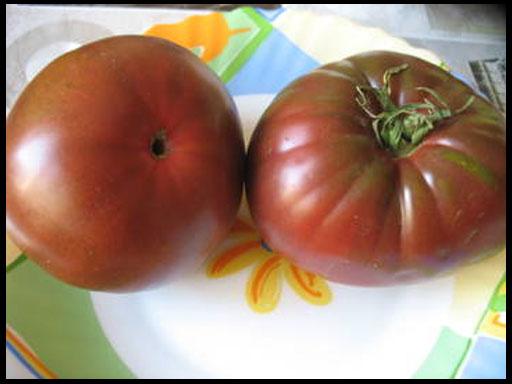 лучшие семена томатов