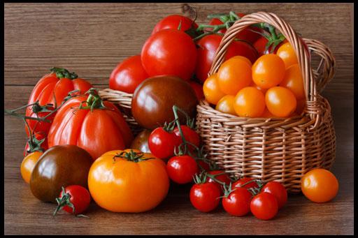 высокоурожайные сорта томатов для теплиц