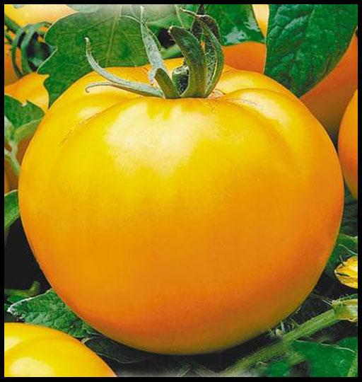 желтые сорта томатов