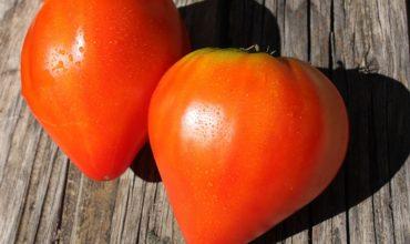 самые вкусные помидоры фото