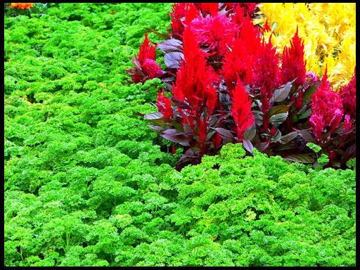 петрушка и другие травы в саду