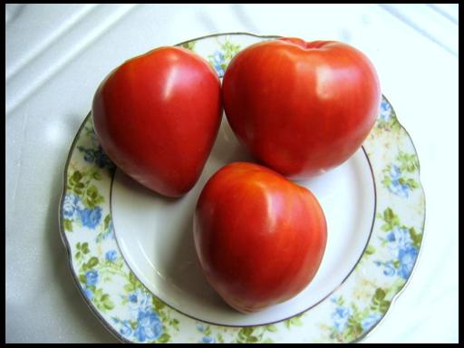 томат Мазарини выращивание