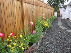 какие цветы посадить вдоль дорожек
