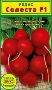 редис селеста ф1 фото