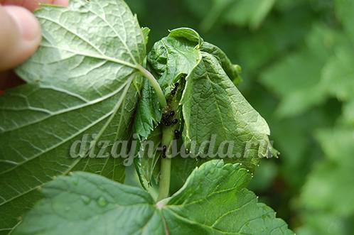 отрава от муравьев