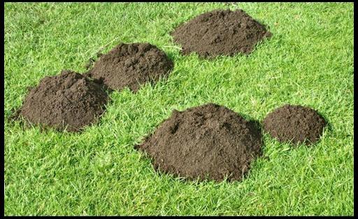 как избавиться от кротов в саду