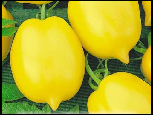 лучшие томаты для открытого грунта