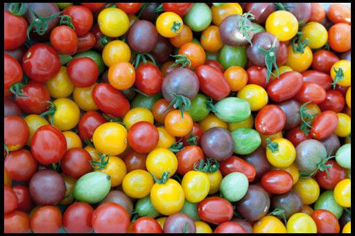 сорта томатов черри