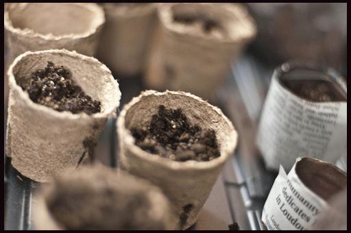 можно выращивать рассаду в торфяных горшочках