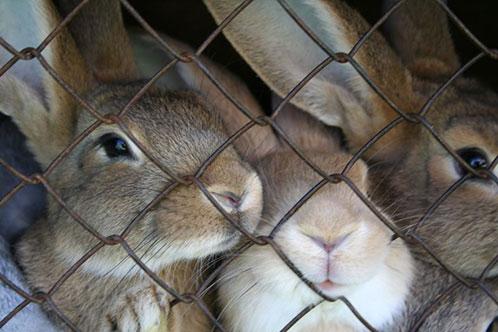 кролики в саду