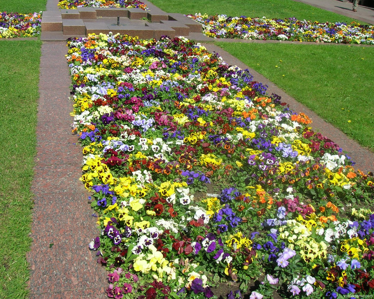 Красивые клумбы с однолетними цветами