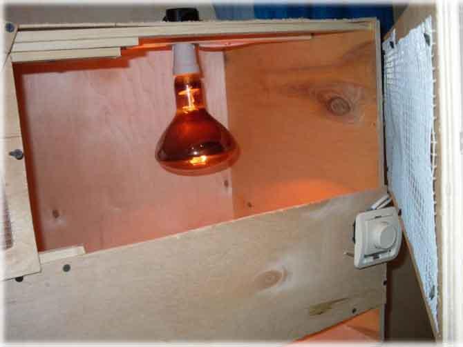 Освещение и обогрев брудера для перепелов инфракрасной лампой