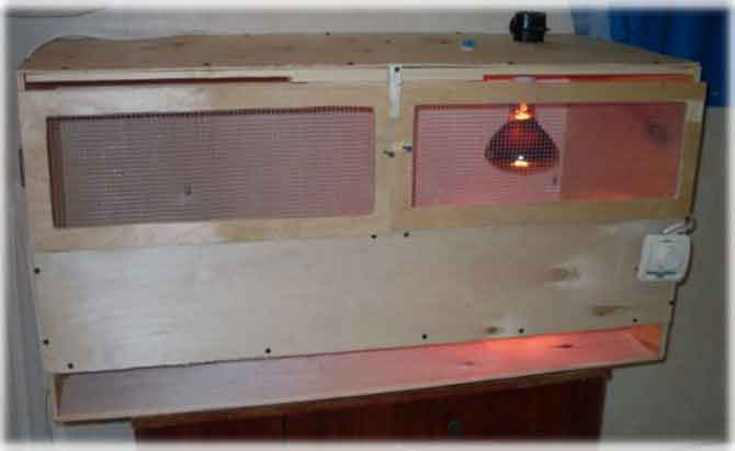 изготовление брудера для перепелок