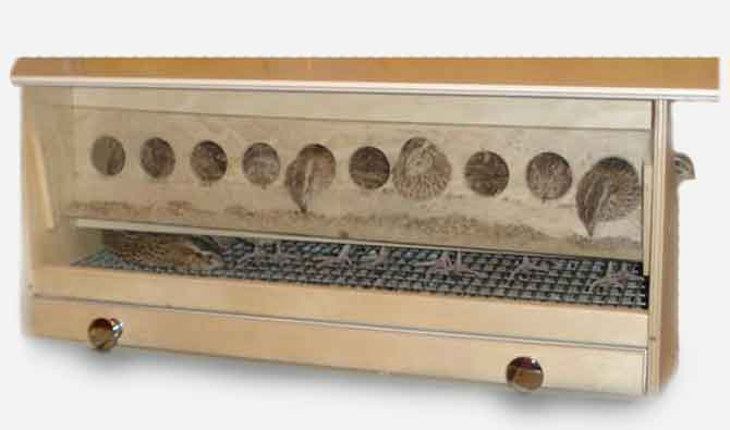 Клетка для перепелов из фанеры