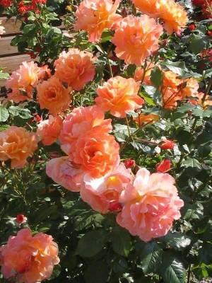 Время обрезать розы