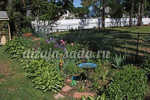 хоста в саду