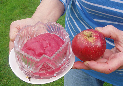 пюре из летних яблок