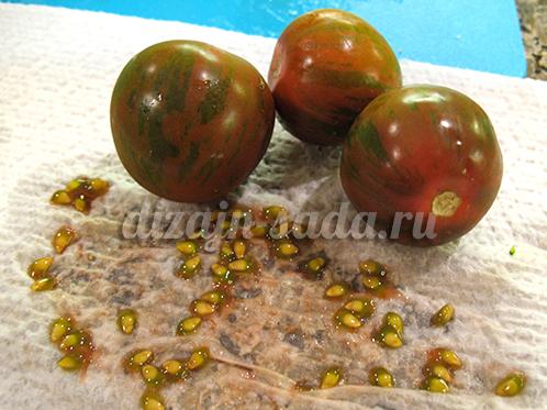 заготовка своих семян томатов