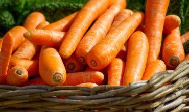 сорта моркови с фото и отзывами