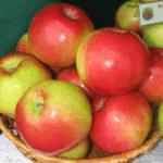 яблоня Вымпел