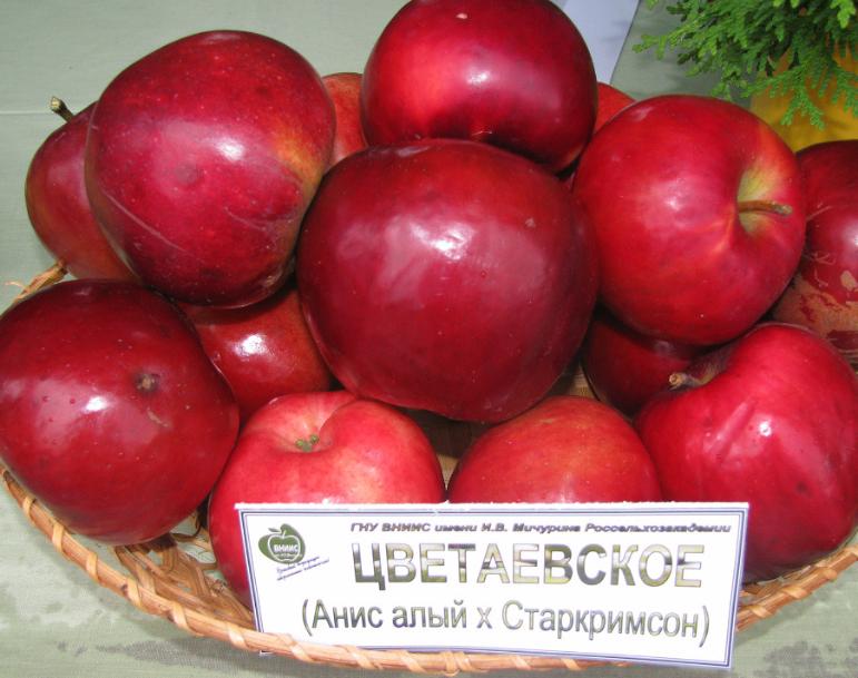 мельба фото яблок