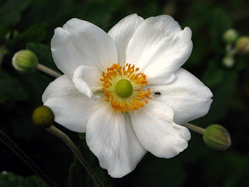 lage vaste bloeiende planten