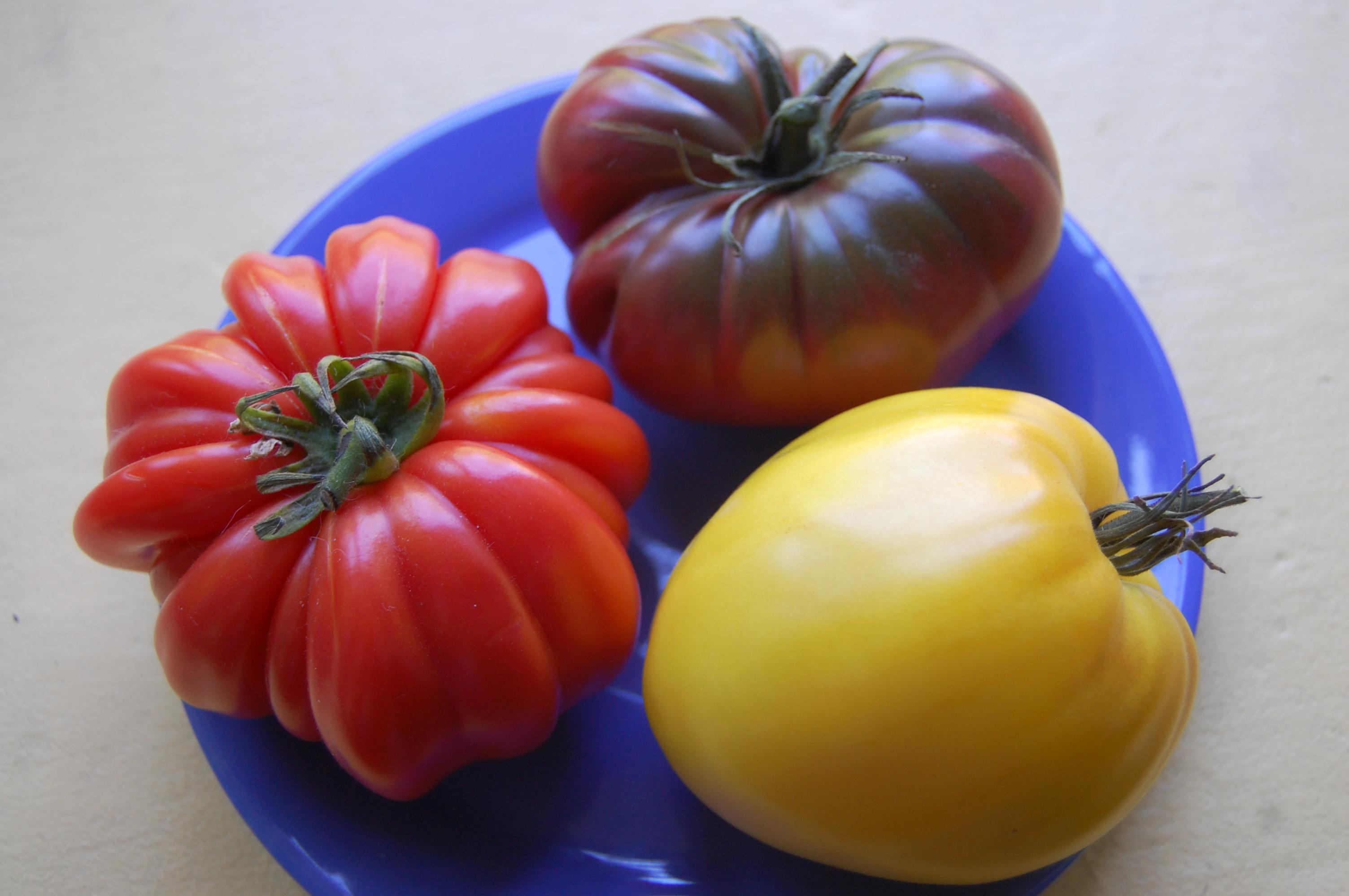 томаты для теплиц