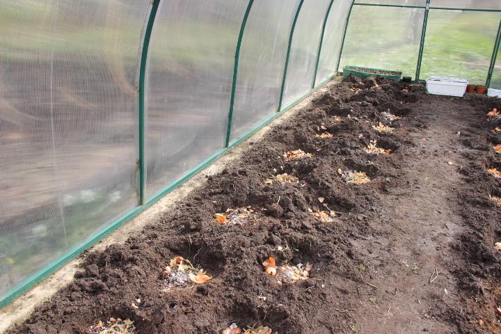 как высадить томаты в теплицу