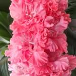 гладиолус цветы жизни