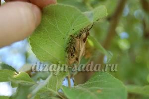 циткор против вредителей