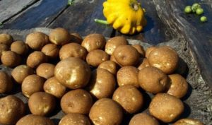 картофель киви фото