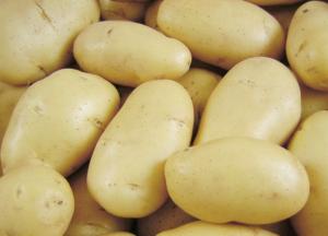 картофель невский фото
