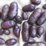 картофель Сирень