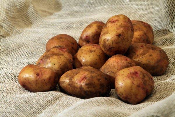 картофель свитанок киевский