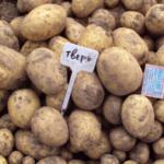 картофель Тверь