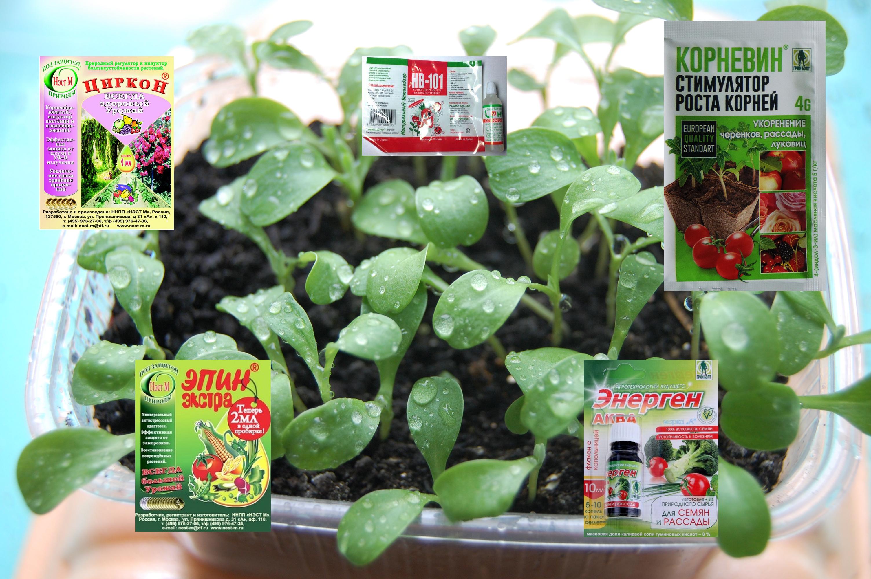 корневин инструкция по применению для комнатных растений цена