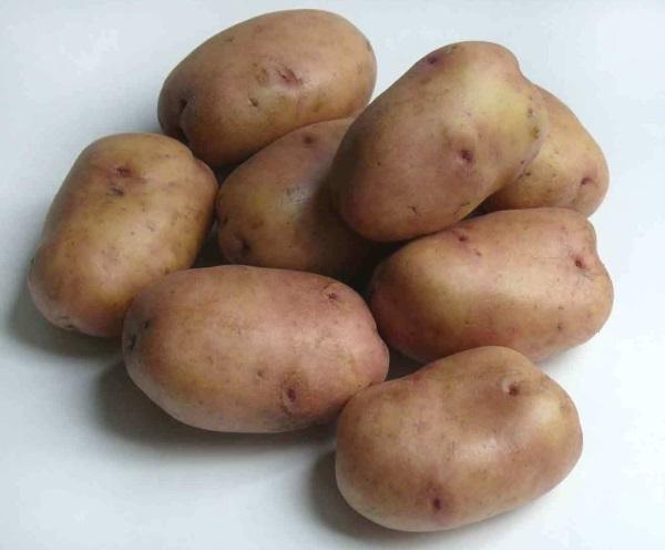 картофель жуковский фото