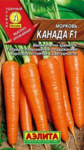 морковь канада фото